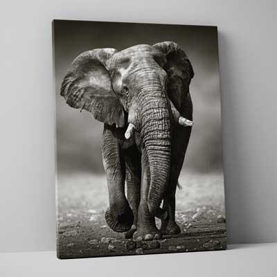 Classic Canvas 100x150cm (40
